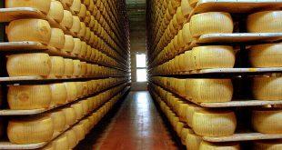 قیمت عمده پنیر پارمسان در ایران