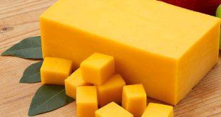 تولید انواع پنیر پیتزا و چدار