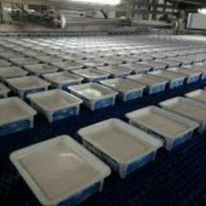 تولید پنیر سفید
